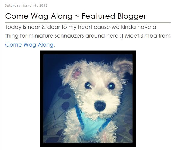 pet blogs united come wag along feature