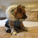 Fashion Friday - HugoPuppyDog ft