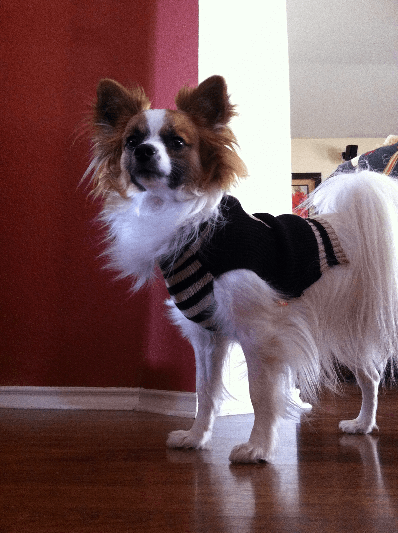 Fashion Friday - Ziggy - Papillon