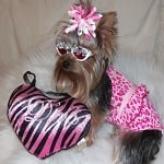 Fashion Friday - Mila My My - Yorkie - Diva ft