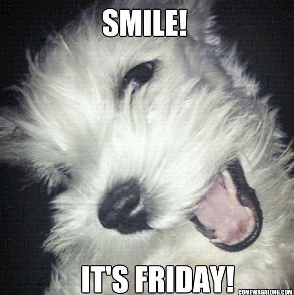 Funny Friday Dog Meme : Thank god it s friday dog edition memes come
