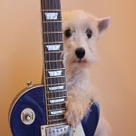 Blog Paws Wordless Wednesday Simba - Dog Rockstar ft