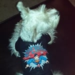 PetSmart Superman Dog Tee ft