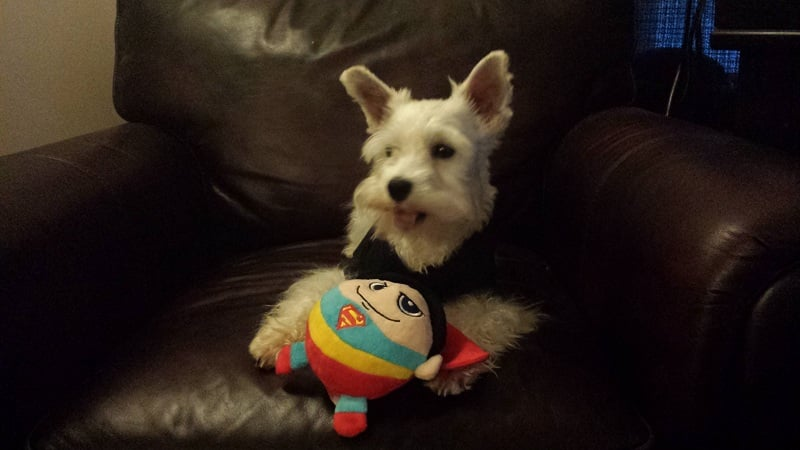 superman dog toy