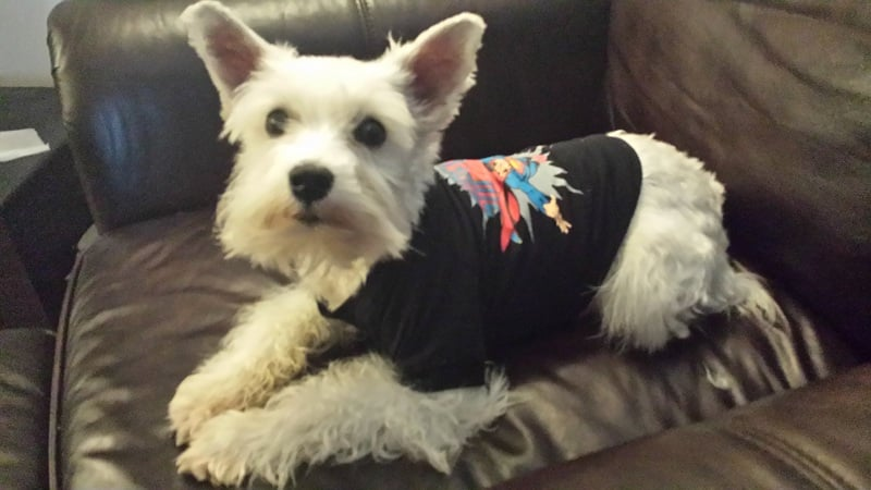 Superman dog shirt