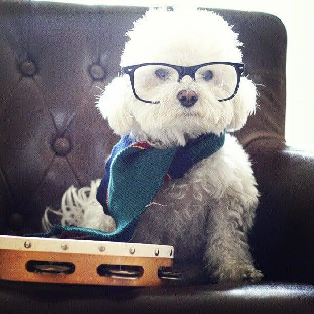hipster dog scarf