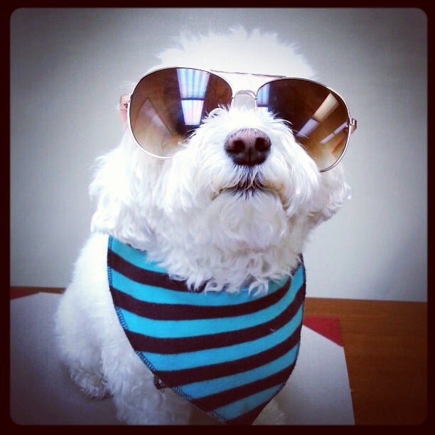 the hipster dog