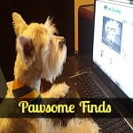 pawsome finds ft