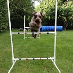 Tilly Schnauzer - Dog Agility ft