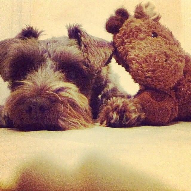 dog stuffed animals