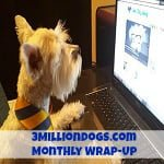 3MillionDogs.com blog posts by Kia Tinsly ft