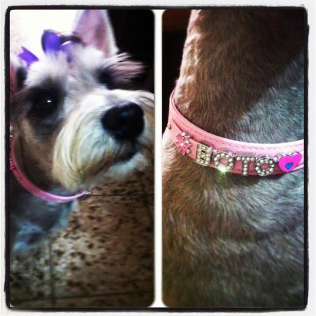 Botoneta the Schnauzer - Dog Collar