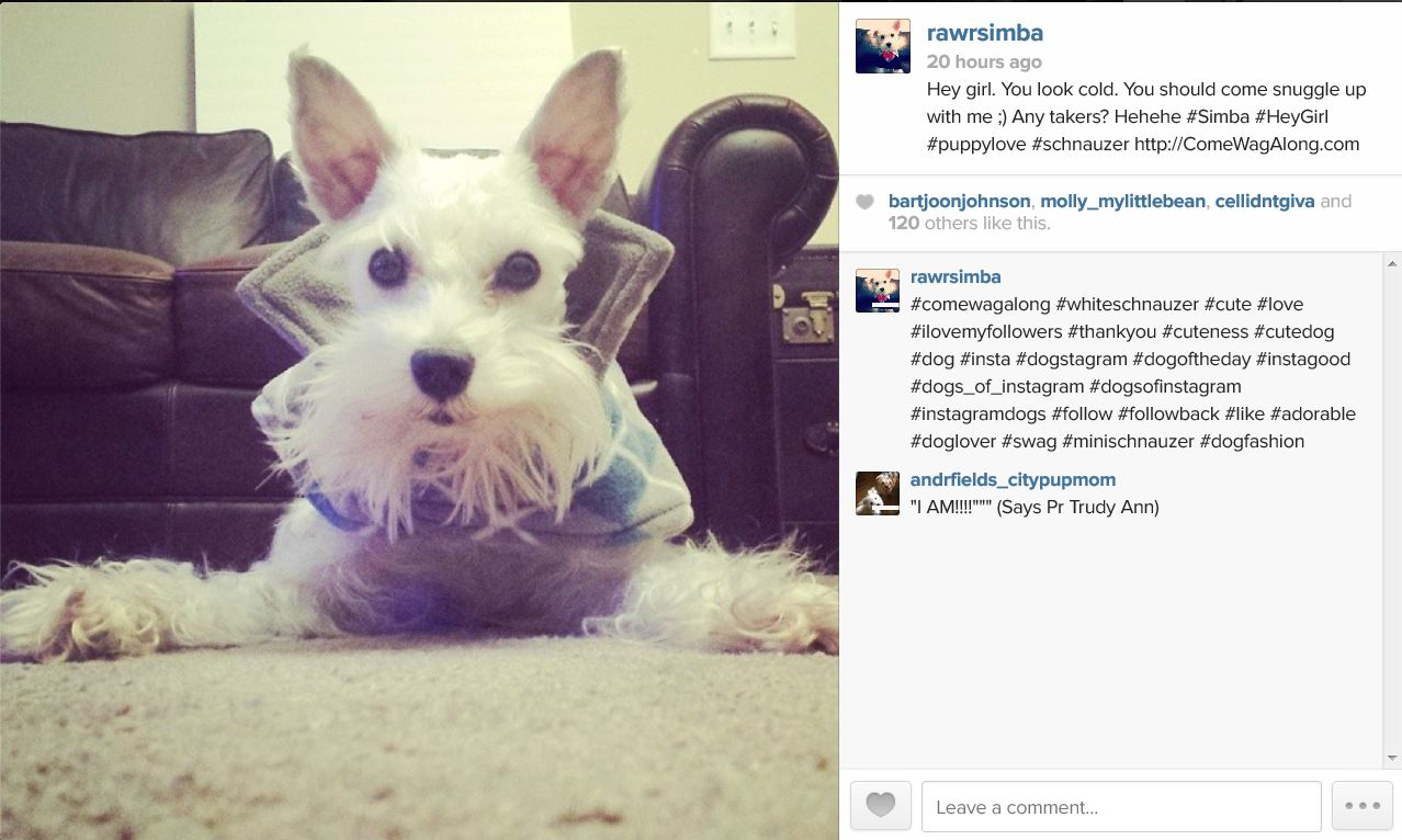 how to write hashtags on instagram