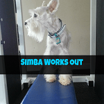 simba works out ft