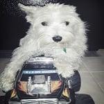 BlogPaws Wordless Wednesday - Simba Rides Truck ft