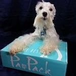 pawpack blogpaws blog hop wordless wednesday ft