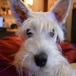 Blog Paws Wordless Wednesday - Bunny Ears ft