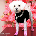 Sparkle the Posh Pup Maltese -  Pink Dog Paws insta ft