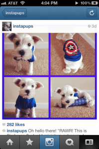 Instagram Feature on Insta Pups