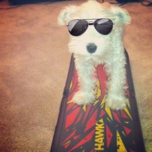 Cool dog. Dog on skateboard.