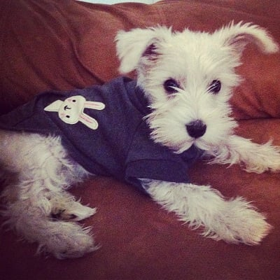 Dog in clothes.