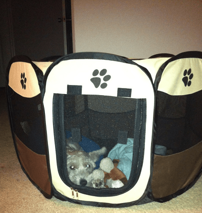 Attirant Simba Laying Down In His Portable Dog Playpen.