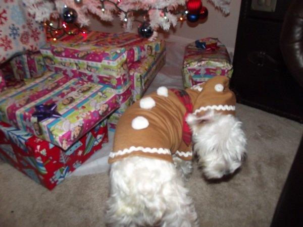 Martha Stewart Pets Ginger Bread Hoodie