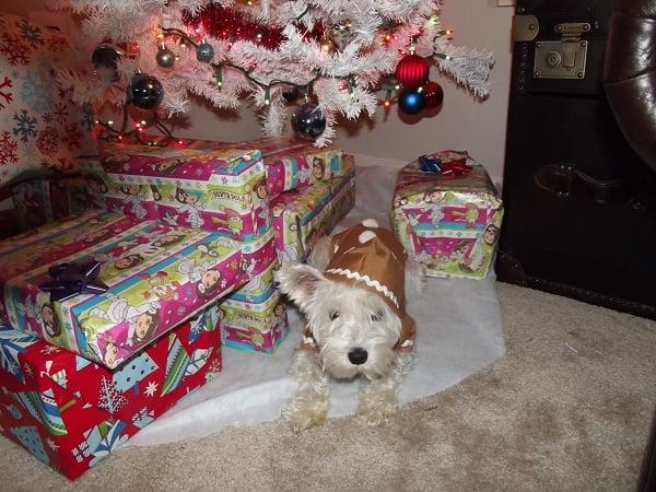 Dog Holiday Hoodies
