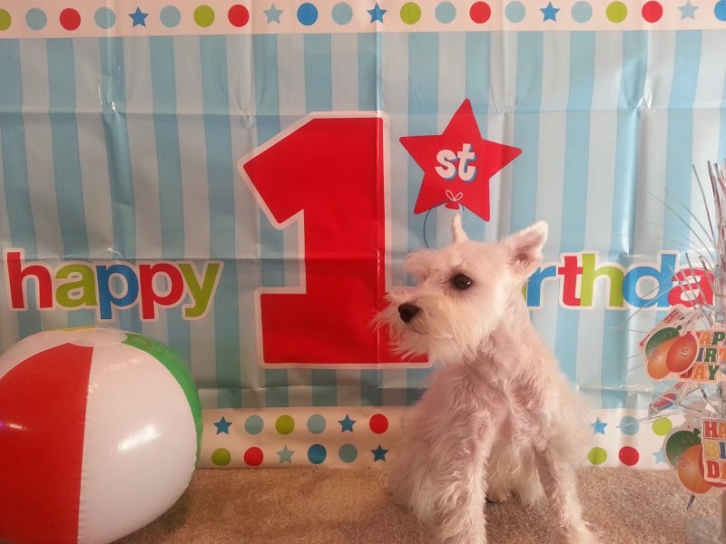 celebrating your dogs birthday