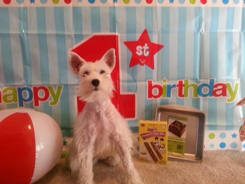 celebrate dog's birthday