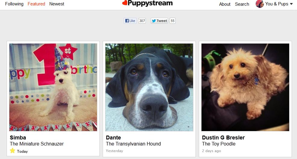 Puppystream featured pup