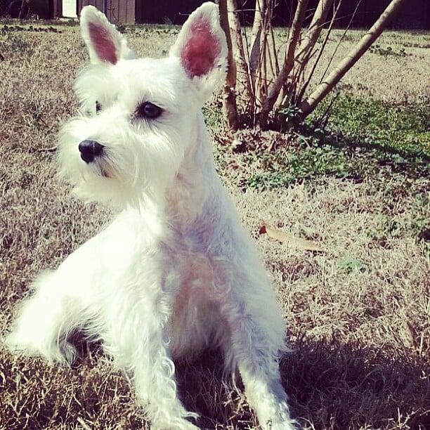 dog pose for camera
