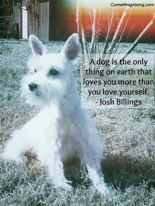 """A dog is the only thing on earth that loves you more than you love yourself."" - Josh Billings"