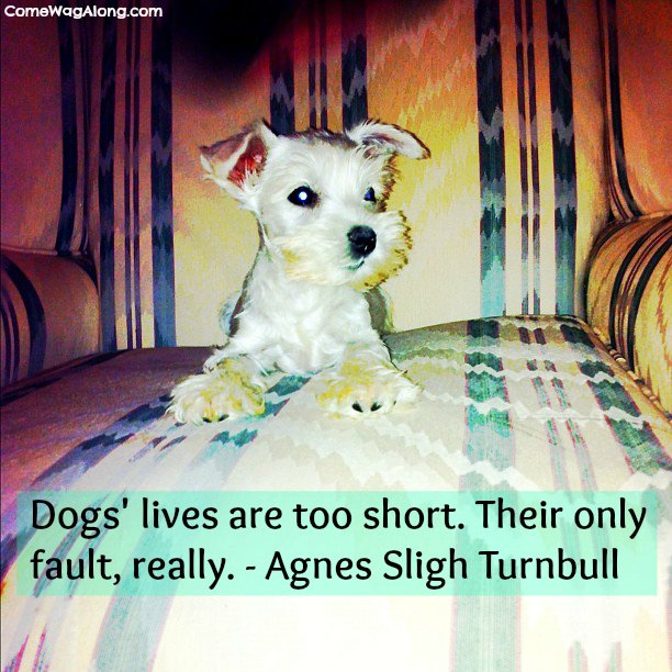 dog picture quotes