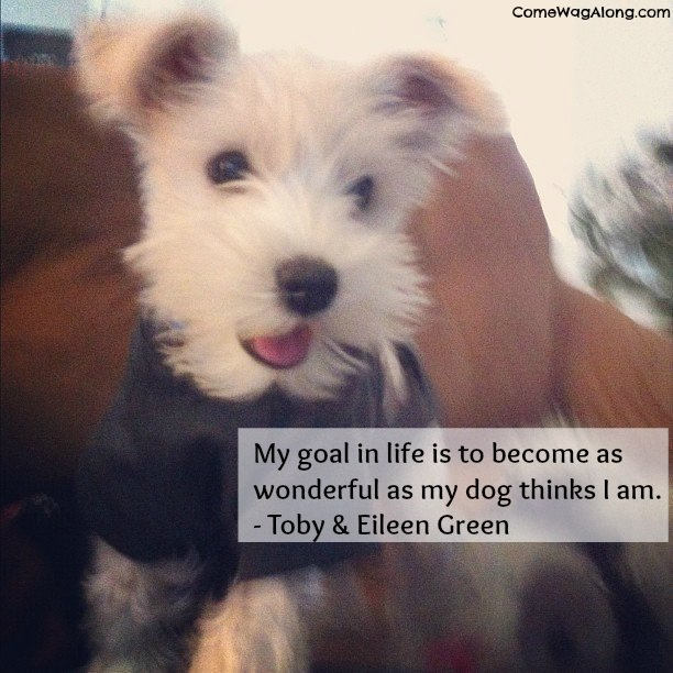 dog life quotes