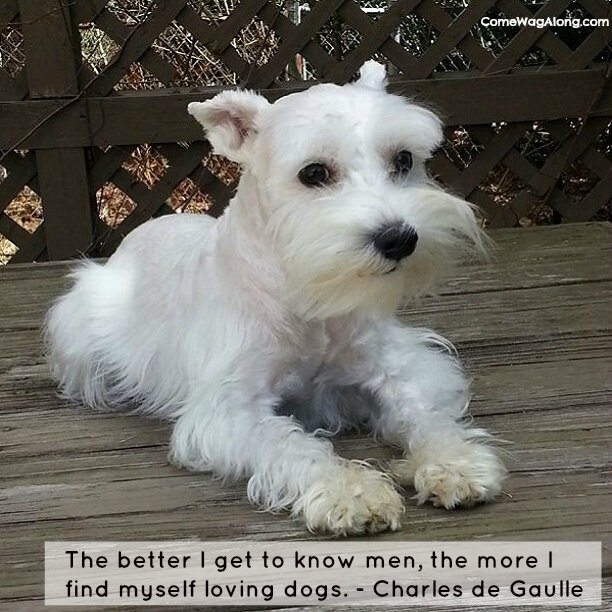 """The better I get to know men, the more I find myself loving dogs."" - Charles de Gaulle"