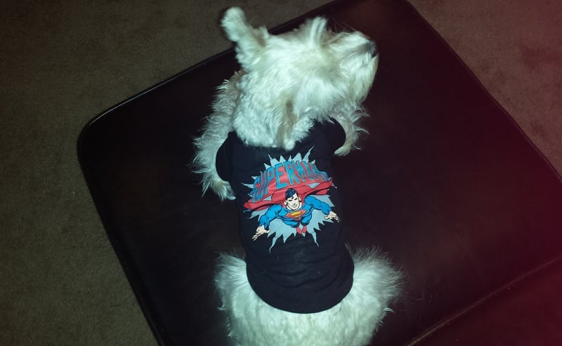 man of steel dog shirt