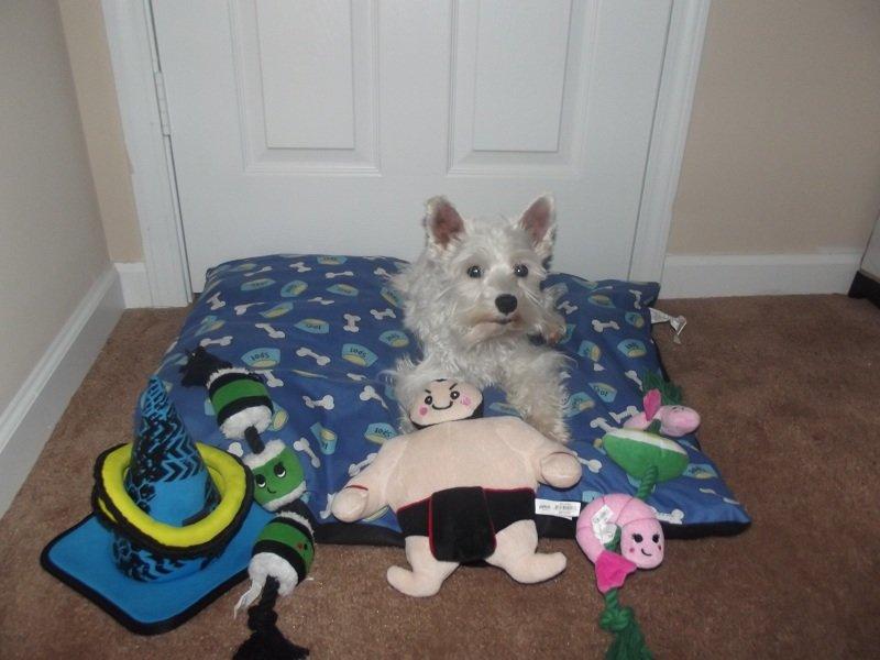 Petco Dog Toys