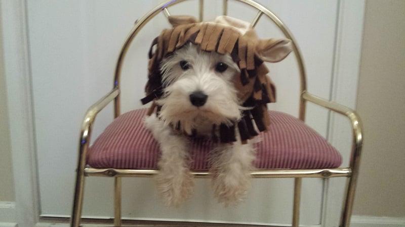 Chillin, sitting on my throne like a BAWSE!