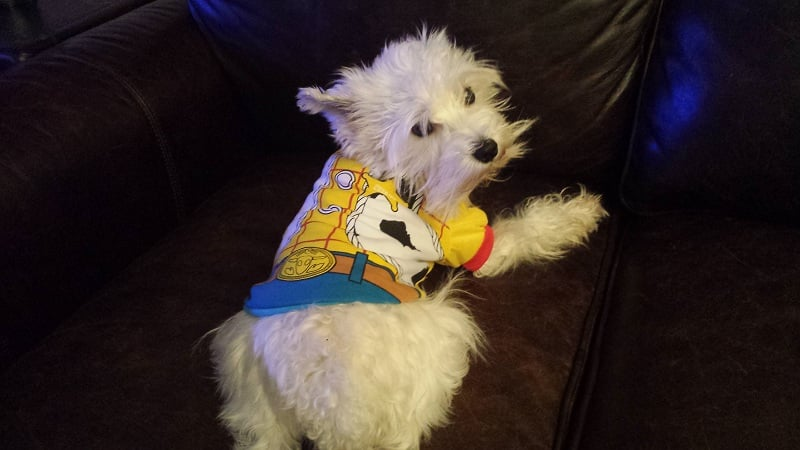 Woody Toy Story Dog Halloween Costume