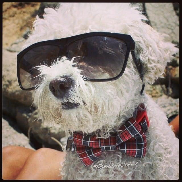 Tinos Dog Couture - KiKi - Dog Bow Ties