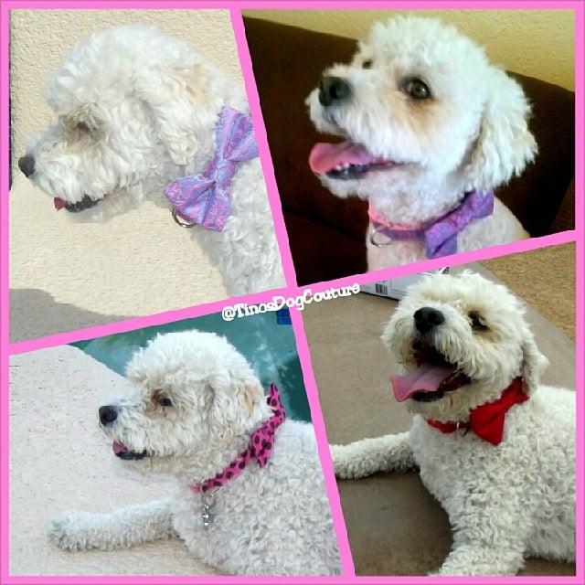 Tinos Dog Couture - KiKi - Girl Dog Bow Ties