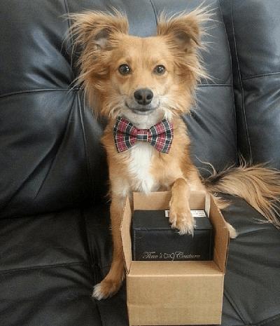 Tino's Dog Couture