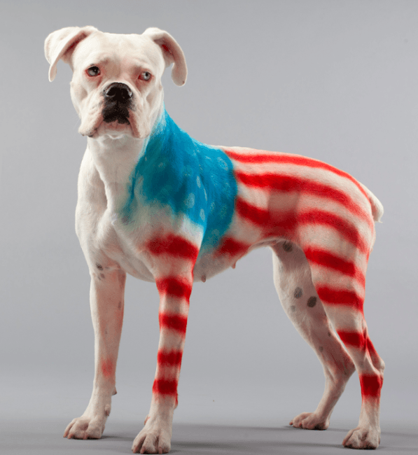 PetPaint 4th of July