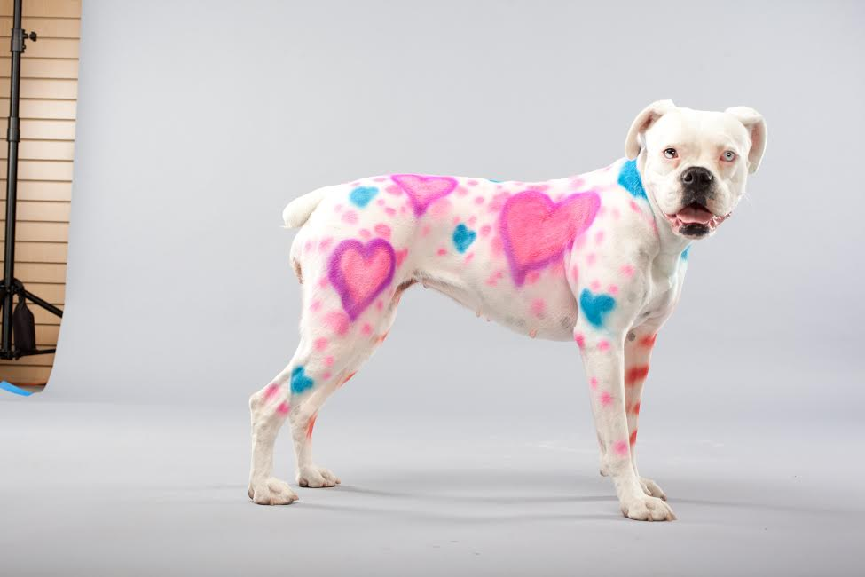 PetPaint Valentine's Day