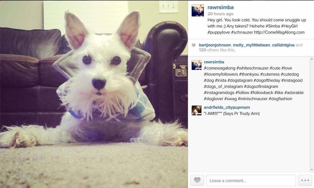 how to get your instagram noticed