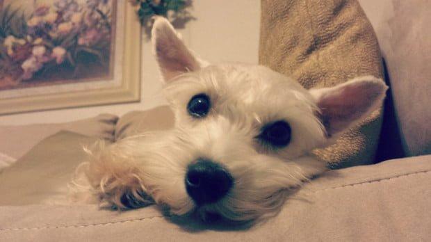 indoor dog activities - comewagalong.com