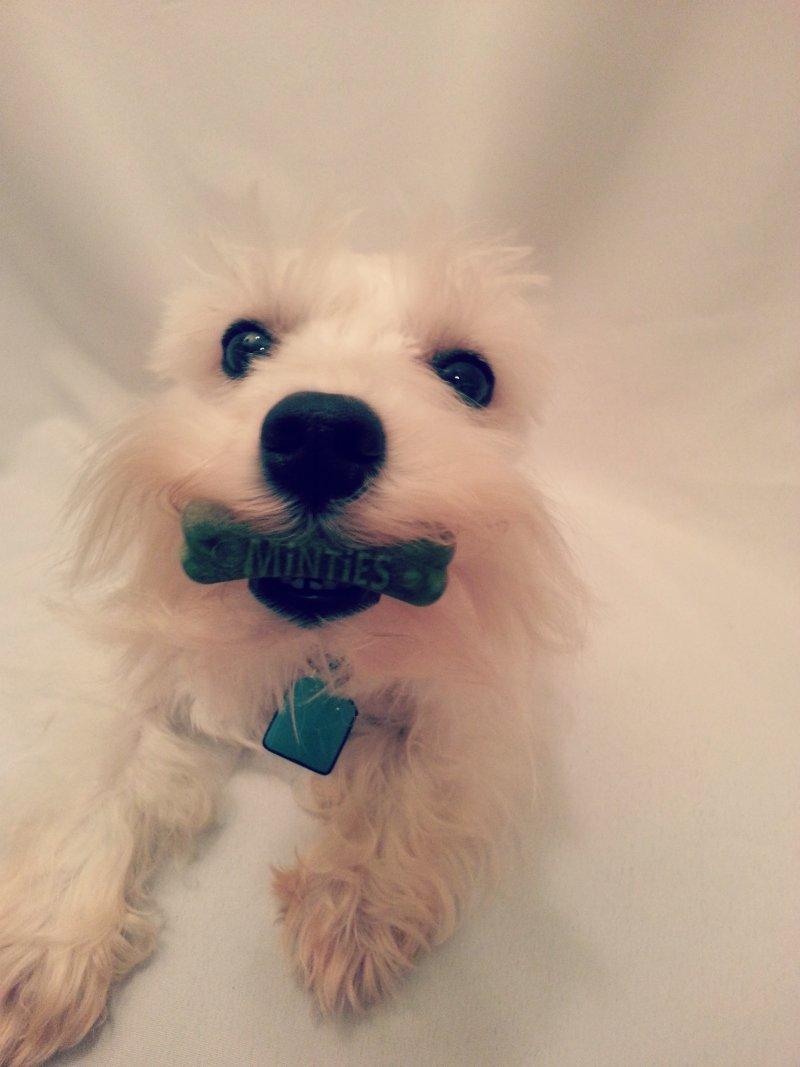 VetIQ Dental Dog Treats - Minties