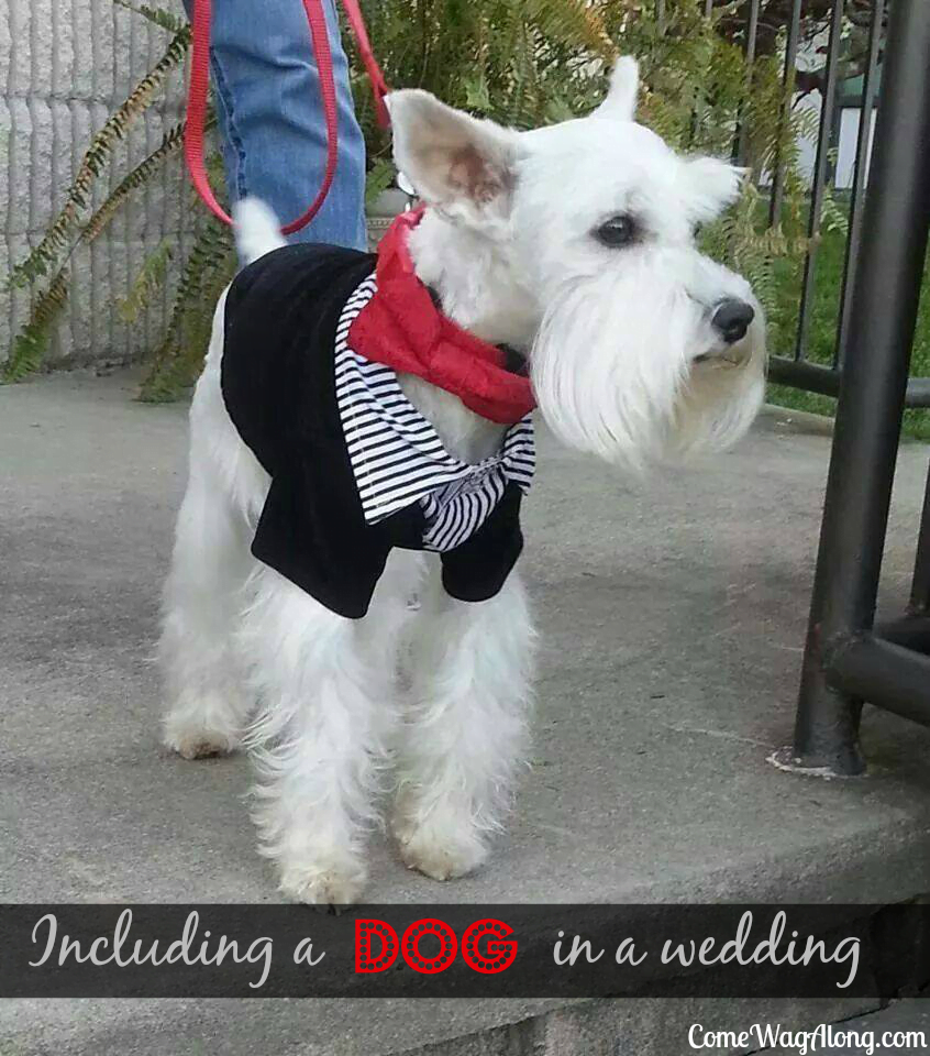 including a dog in a wedding