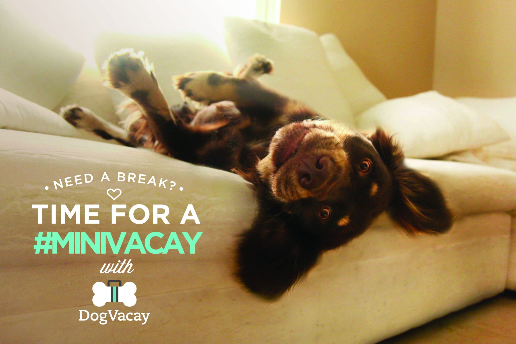 dogvacay.com - where to leave your dog when on vacation